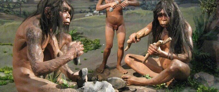 Homo erectus © National Museum of Indonesia
