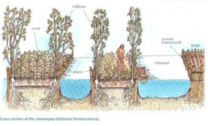 Chinampas2C-The-Floating-Gardens-of-Mexico-cross-section