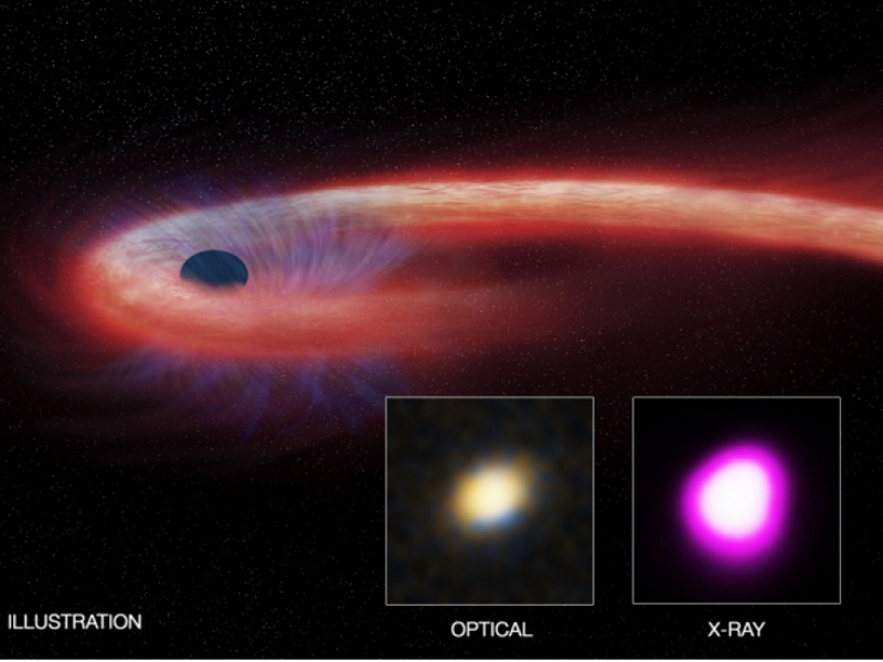 Artist's view of the star's material (red) absorbed by a black hole, and generating X-ray emissions during an event called tidal destruction.