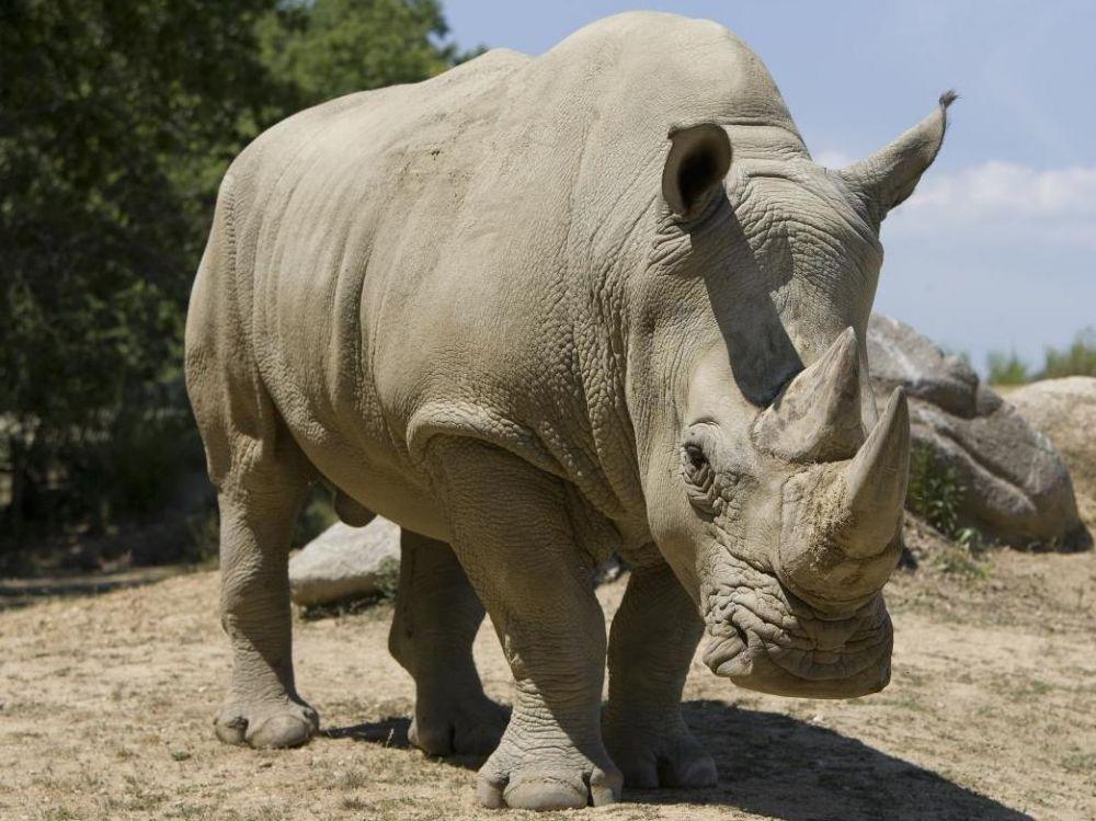 cover-r4x3w1000-58bec3e440385-rhinoceros-copie