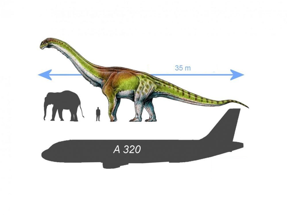Representation at the scale of Patagotitan mayorum, an airbus A320, a man and an elephant